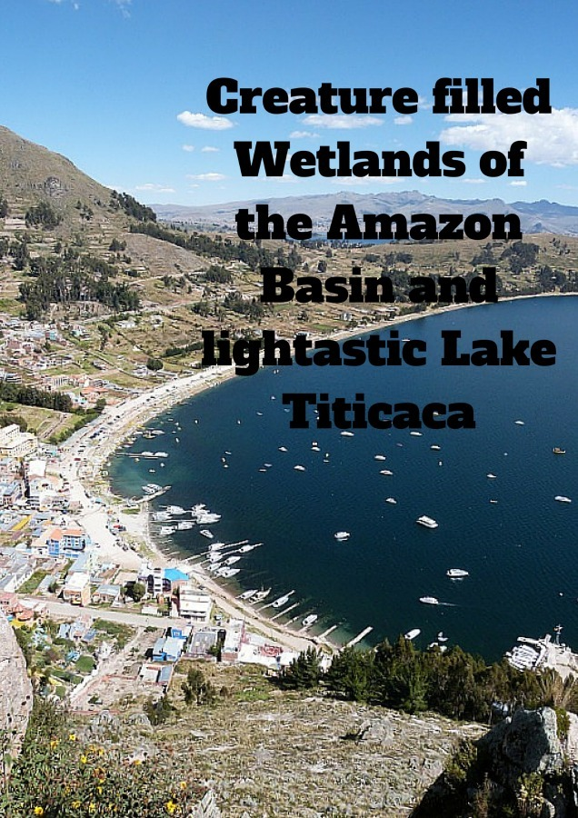 Creature filled Wetlands of the Amazon Basin and lightastic Lake Titicaca