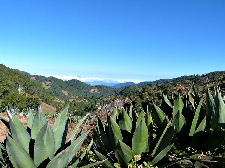 Hiking in Mexico's Sierra Norte Mountains between the Pueblos Mancomunados Villages