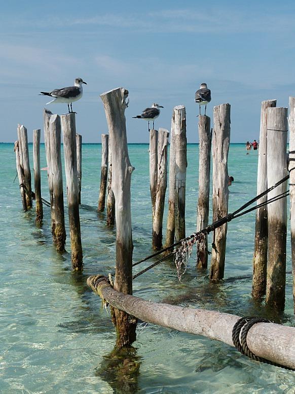 Seagulls on Isla Mujeres, Yucatan Coast, Mexico