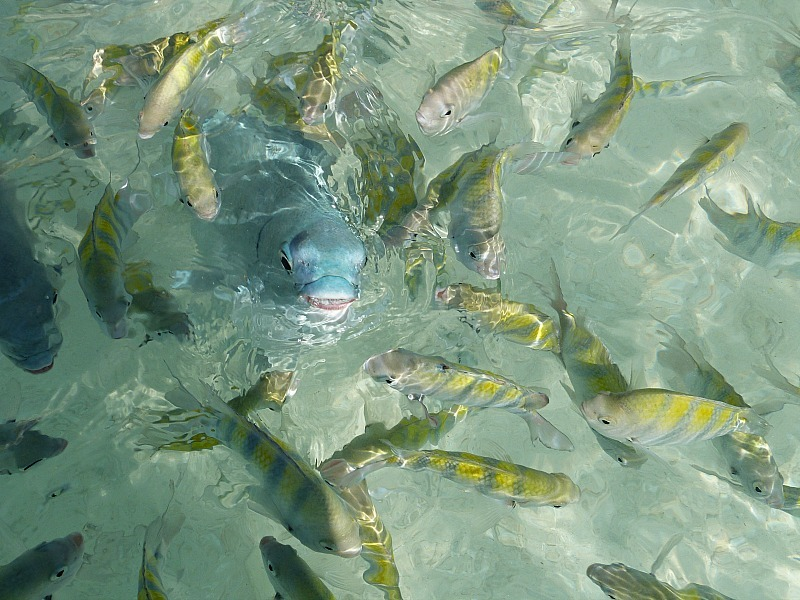 Crazy fish snorkeling off Isla Mujeres, Yucatan Coast, Mexico
