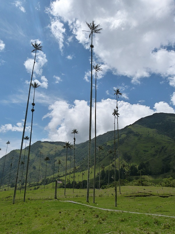 Hiking in the Valle de Cocora in Colombia's Coffee Region