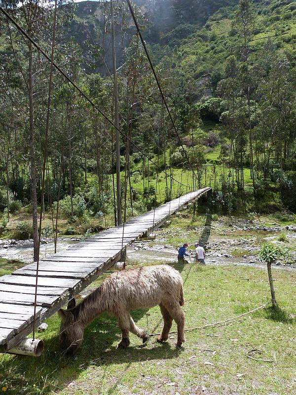 Horse on the Quilotoa Loop in Ecuador