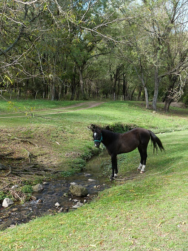 Horse by the river in Villa General Belgrano in Northern Argentina