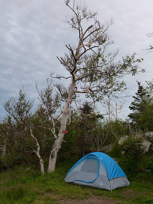 Our campsite on Grand Manan Island