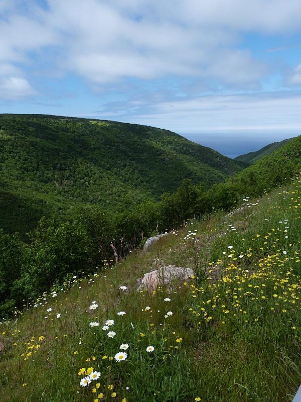 Wild flowers in Cape Breton Highlands National Park, Nova Scotia