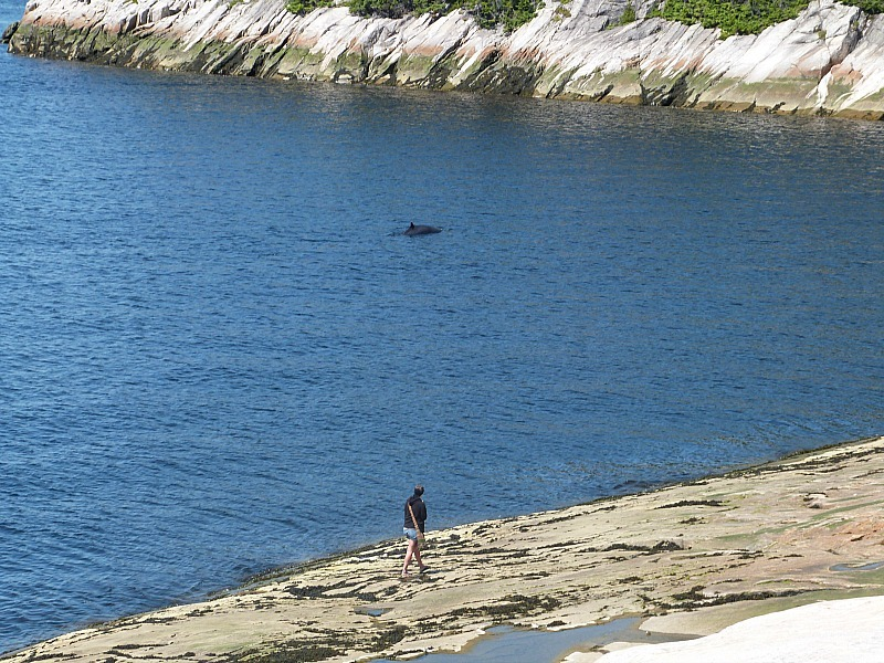 Whale watching from shore in Tadoussac, Quebec