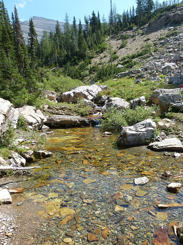 Crystal clear stream along the Crypt Lake Hike in Waterton Lakes National Park, Canada