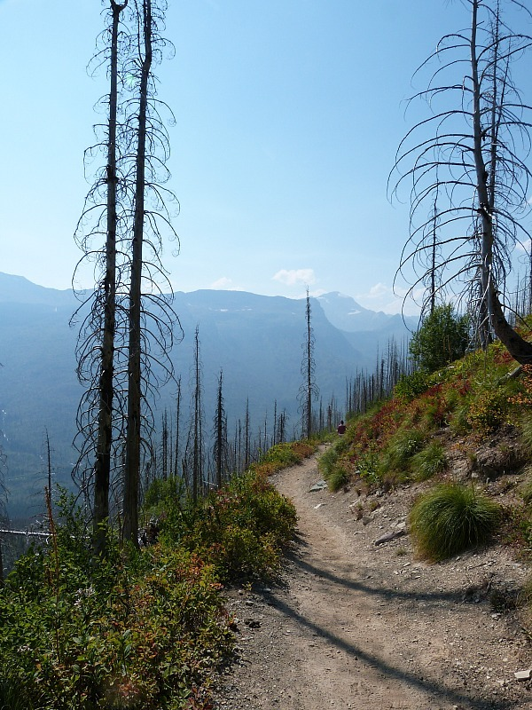 Hiking the Highline Trail in Glacier National Park in Montana - a Rocky Mountain Road Trip must