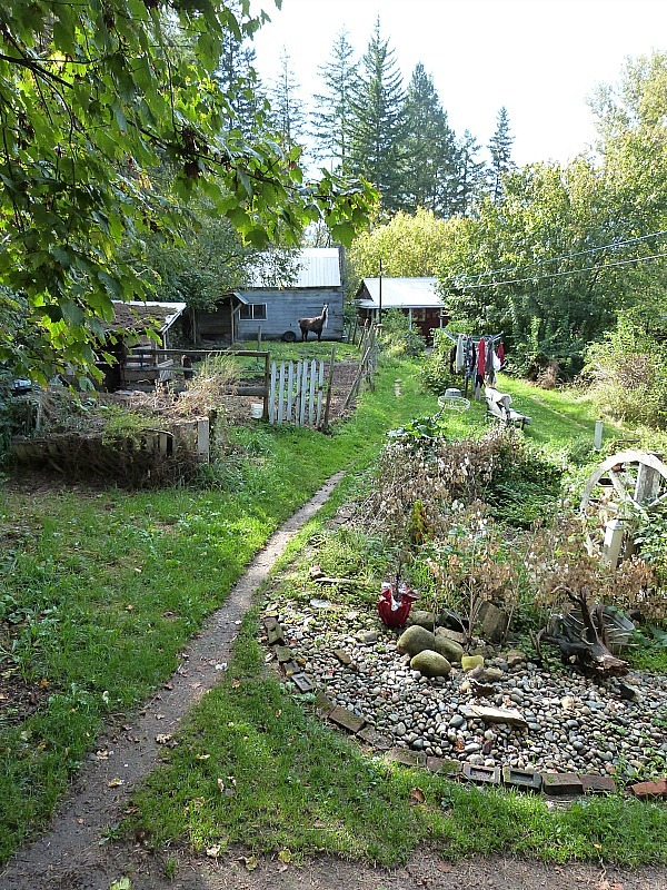 The backyard of the Squilax HI Hostel where I did a Help X Placement in Canada