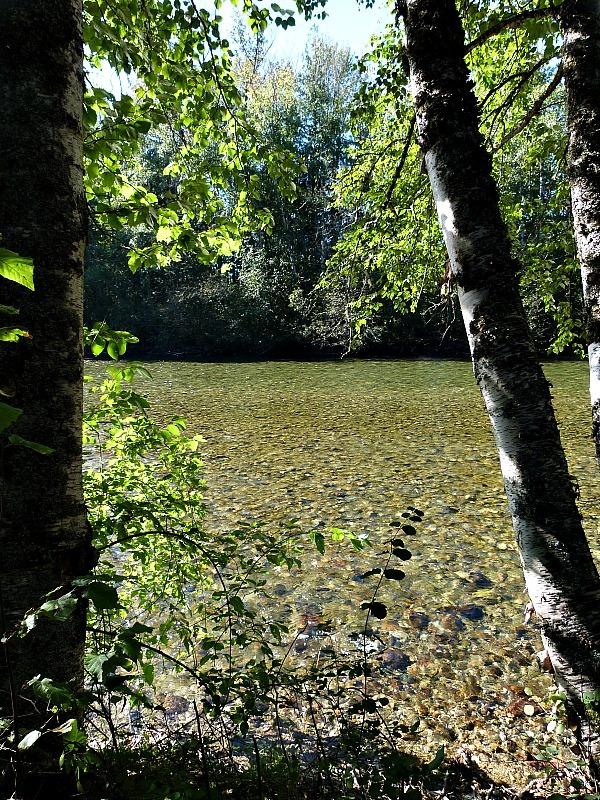 Hiking in Roderick Haig-Brown Provincial Park in the Shuswap Lake Region of British Columbia
