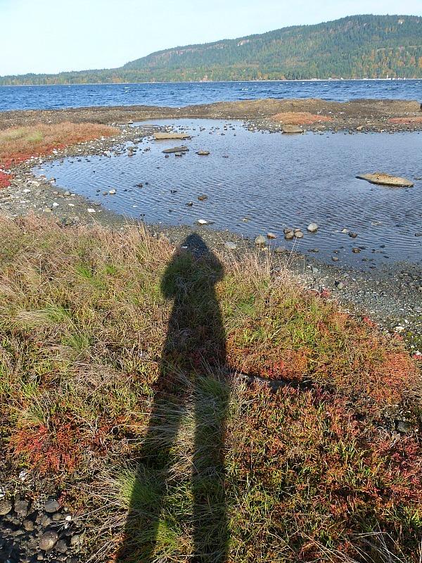 Coastal walks on Denman Island in Canada