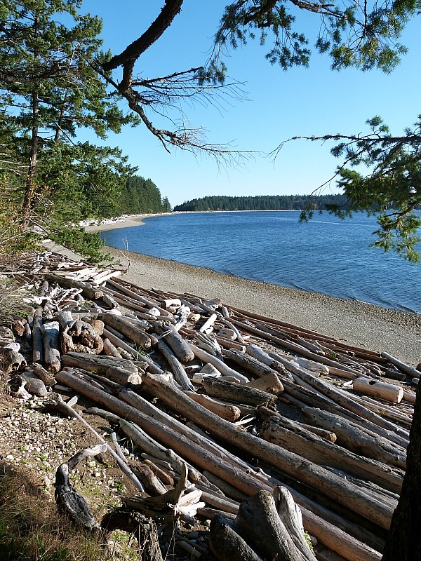 Visiting Rebecca Spit is one of the best things to do on Quadra Island