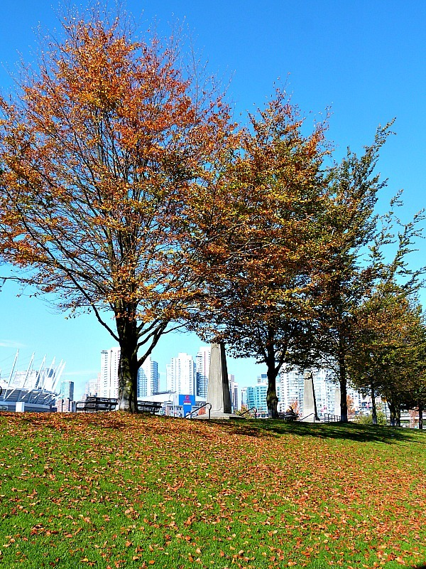 Beautiful autumn trees in Vancouver in the Fall
