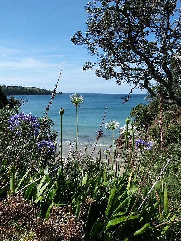 View over Little Oneroa beach on Waiheke Island in New Zealand