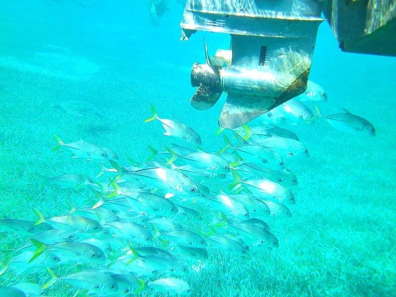 Fish off Caye Caulker, Belize