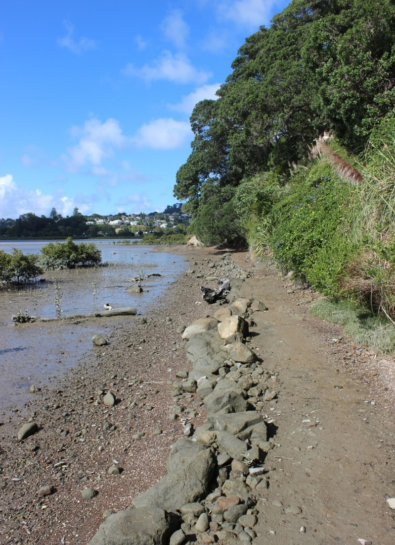 Spend One Day in Auckland in Parnell, and walk the Hobson's Bay Walkway