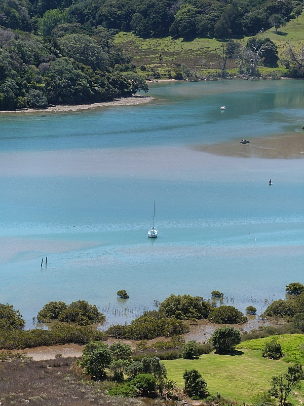 Hiking in Wenderholm Regional Park - one of the best day trips from Auckland city