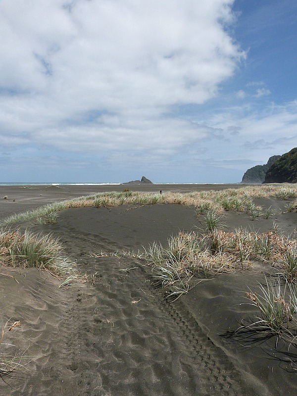 Exploring the beaches of West Auckland