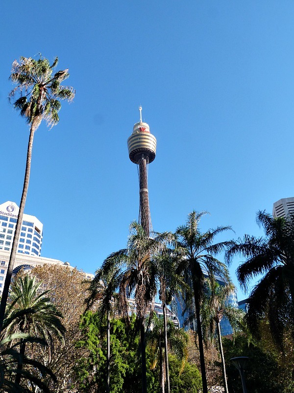 Palm trees - One of the 30 reasons why I love Sydney