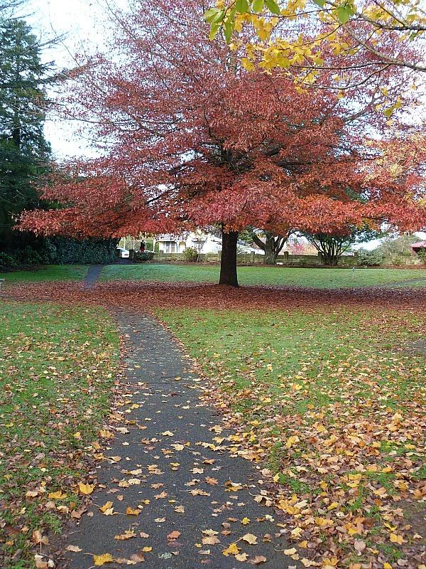 Autumn colours around Katoomba during a Blue Mountains trip in autumn