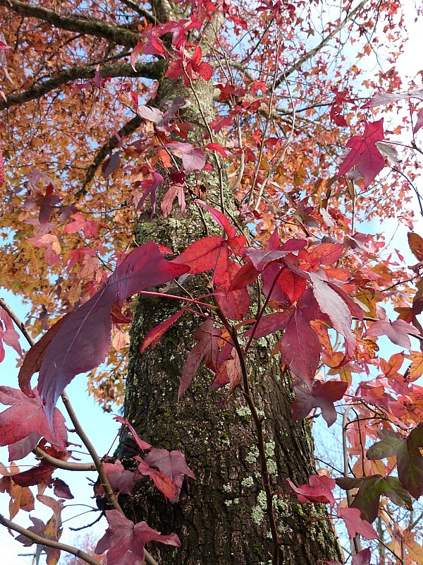 Autumn colours around Katoomba during a Blue Mountains getaway in autumn