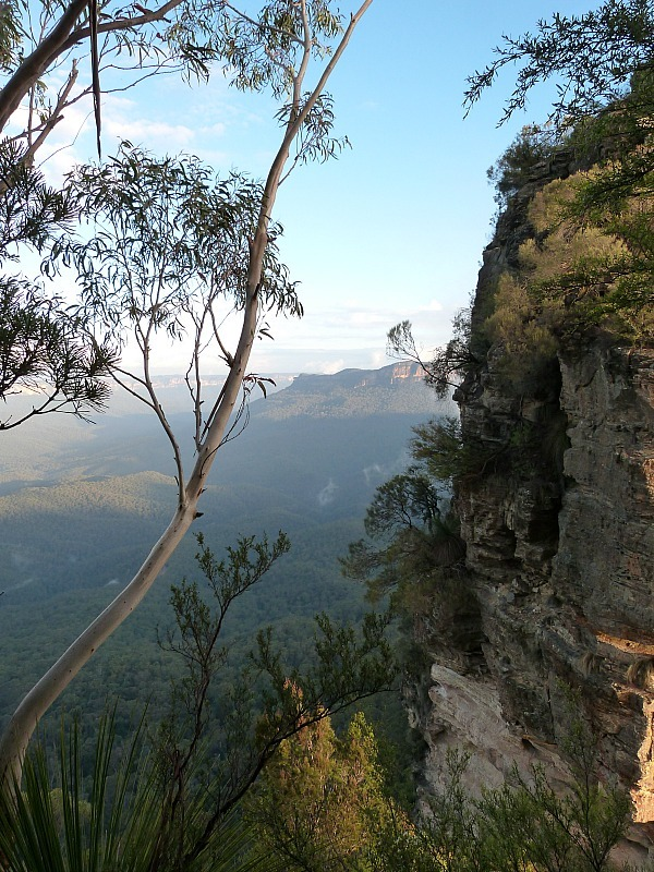 View from one of the Blue Mountains walking tracks near Katoomba