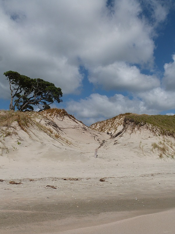 Pakiri Beach in North Auckland - a highlight of any Northland New Zealand Road Trip Itinerary