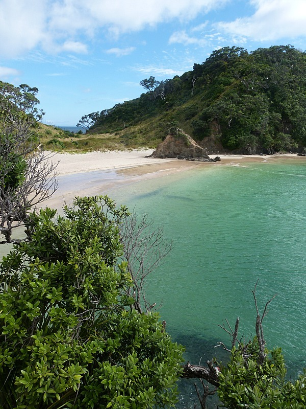 Whale Bay on Northland's Tutukaka Coast - a highlight of any Northland New Zealand Road Trip Itinerary