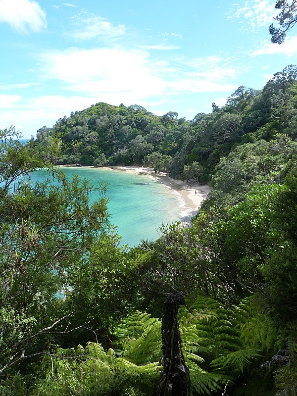 Whale Beach on the Tutukaka Coast - a highlight of any Northland New Zealand Road Trip Itinerary
