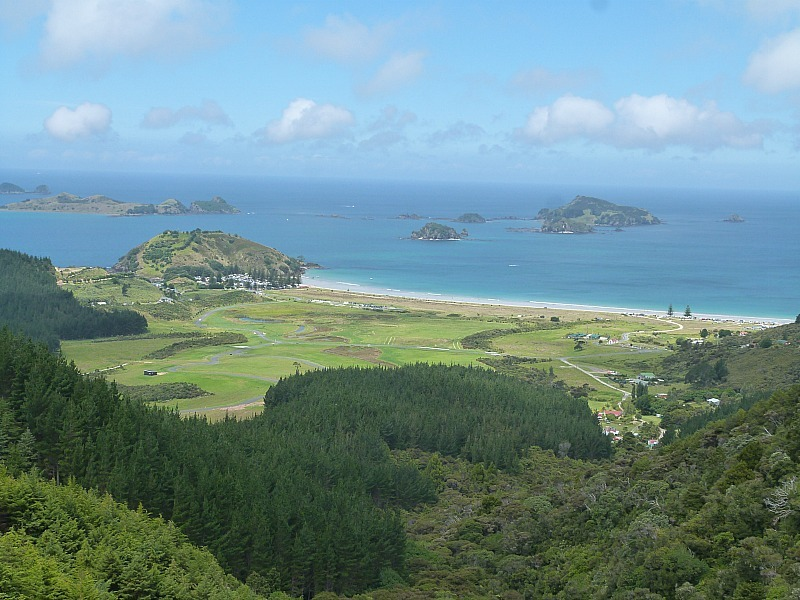 View over Matai Bay in Northland, New Zealand - a highlight of any Northland New Zealand Road Trip Itinerary