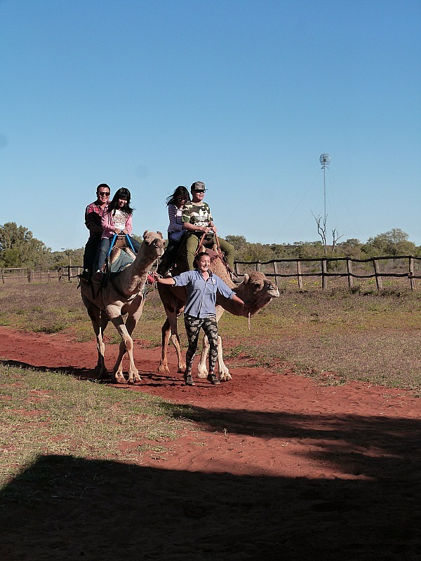 Camel riding near Uluru in the Australian Outback