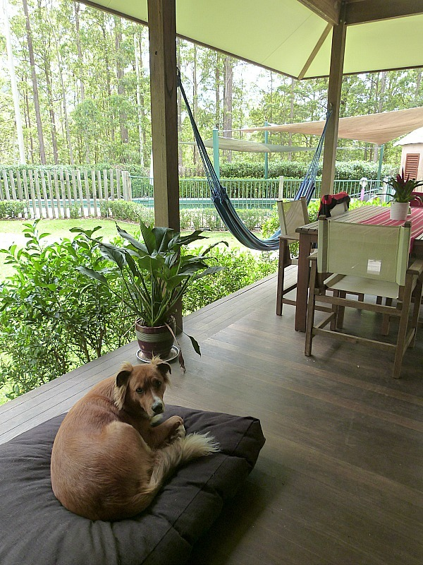 Hanging out at Treetops in Bellingen, Australia