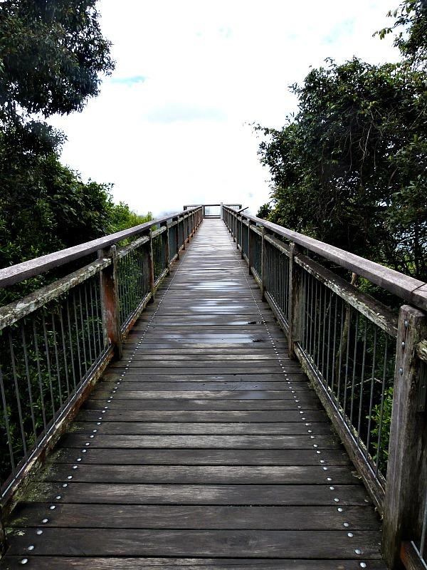 Dorrigo National Park skywalk in NSW, Australia
