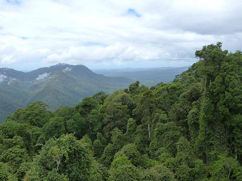 Rainforest in Dorrigo, Australia