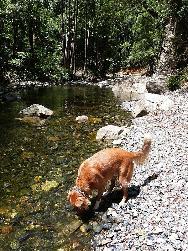 Never never creek in the Glennifer Valley near Bellingen