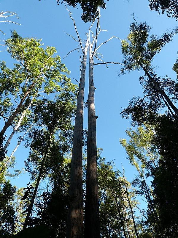 Hiking around Bellingen in Australia