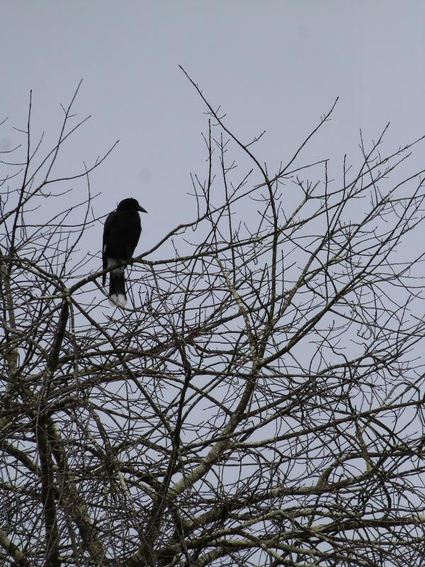 Local birdlife in the Blue Mountains of Australia