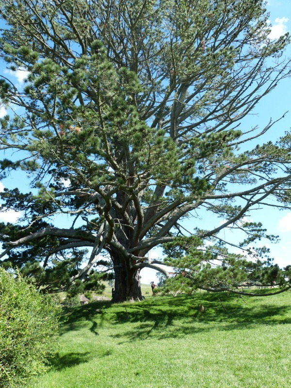 Party tree at the Hobbiton Movie Set in New Zealand