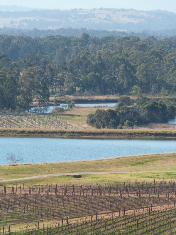 Audrey Wilkinson Winery in the Hunter Valley