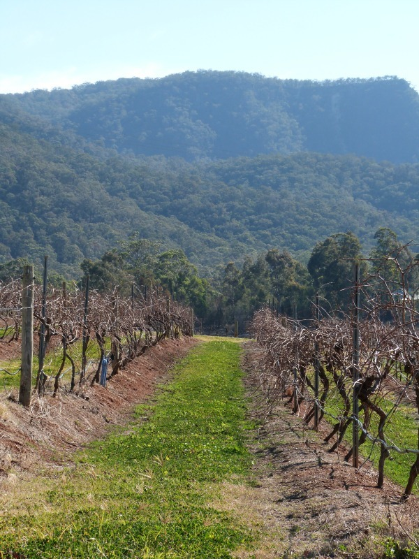 Exploring wineries in the Hunter Valley of Australia