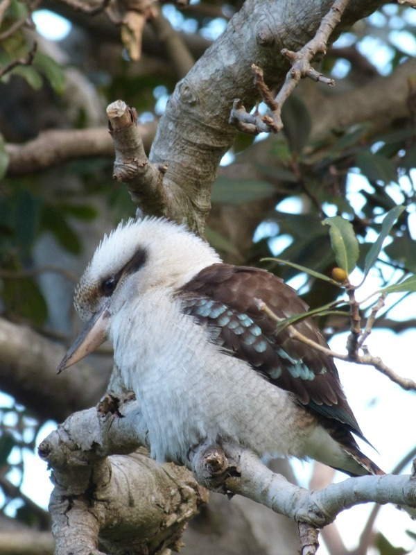 You can see lots of native wildlife on the Manly to Spit walk in Sydney