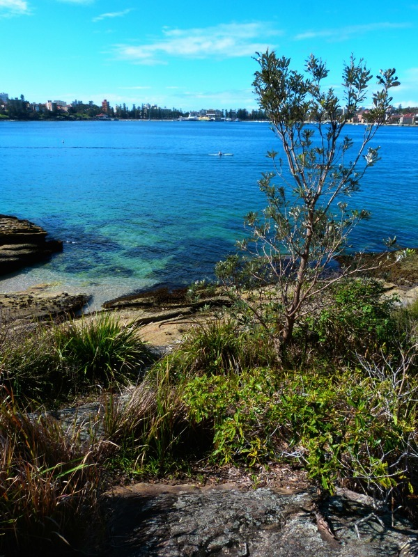 Inviting beaches on the Manly to Spit walk in Sydney
