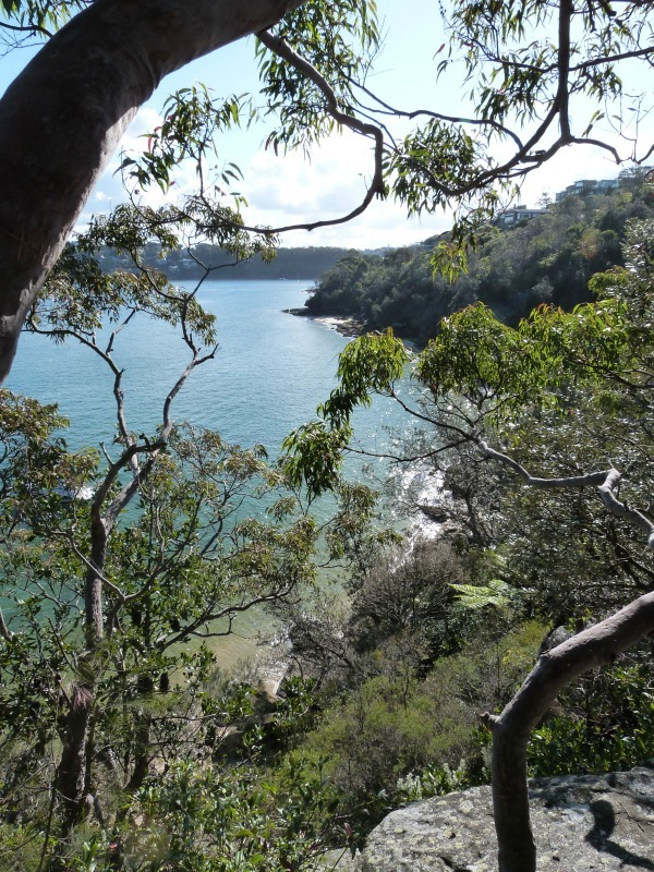 Coastal views abound on the Manly to Spit walk