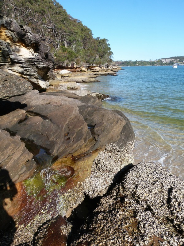 Quiet coves on the Manly to Spit walk