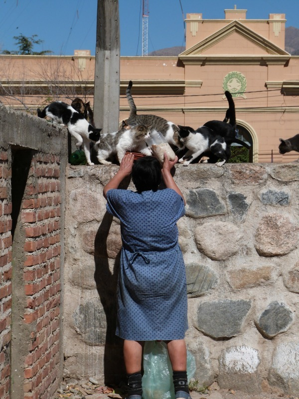 Crazy cat lady of Cafayate in Argentina