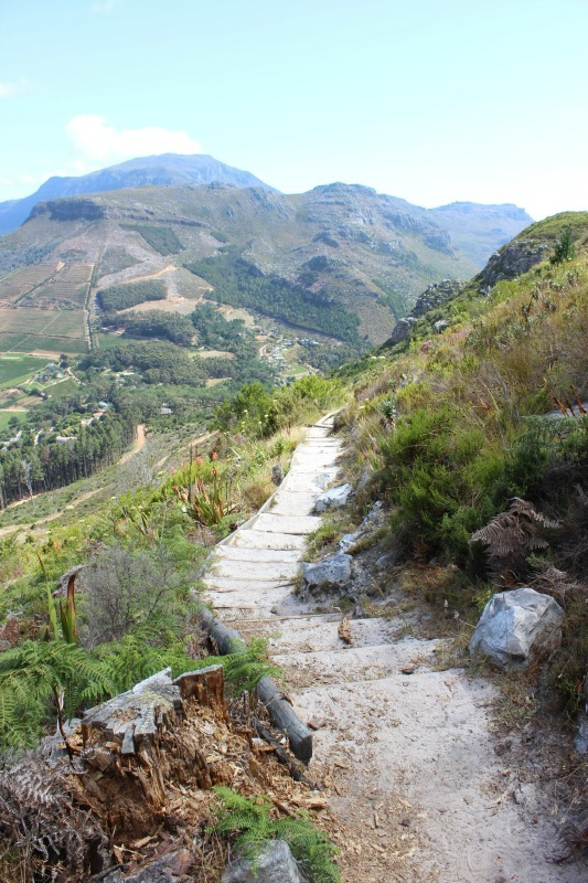 Hiking above Constantia Nek - a great Cape Town hike