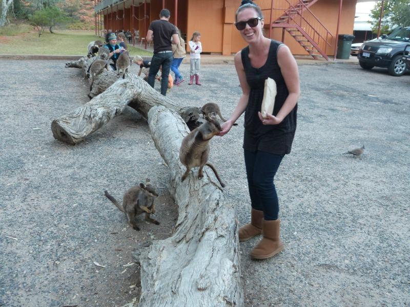 Hand feeding Black Footed Rock Wallabies in Alice Springs - a 2014 travel highlight