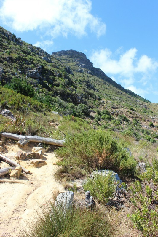Hiking around Cape Town's Mountains