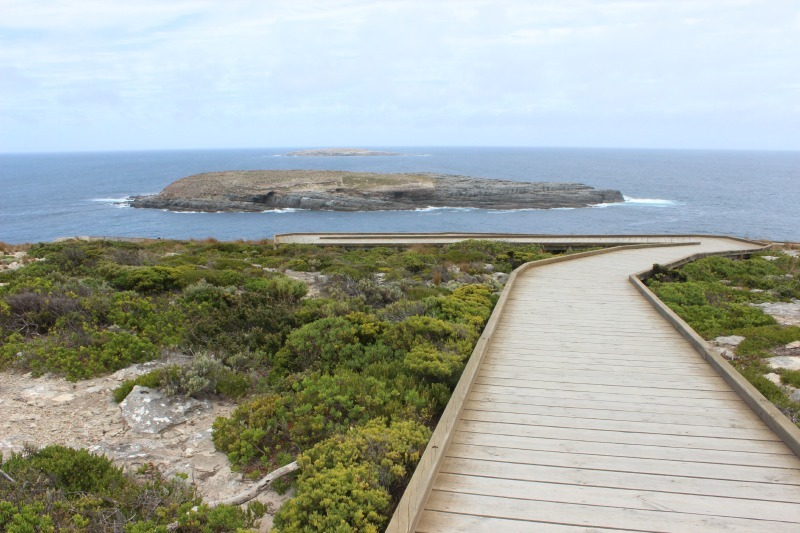 Cape Du Couedic boardwalk on Kangaroo Island