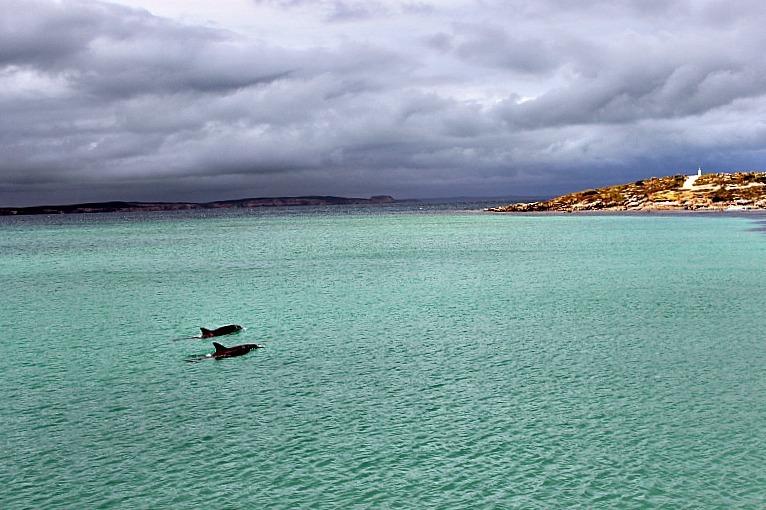 Vivonne Bay dolphins